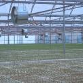 tremel-pine-crop-0665